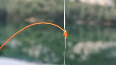 Photo of Noeud de potence SG Knot : dropshot, teaser et pêche en mer