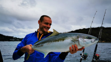 Photo of Pêche des Yellowtail Kingfish en Australie : poissons du bout du monde